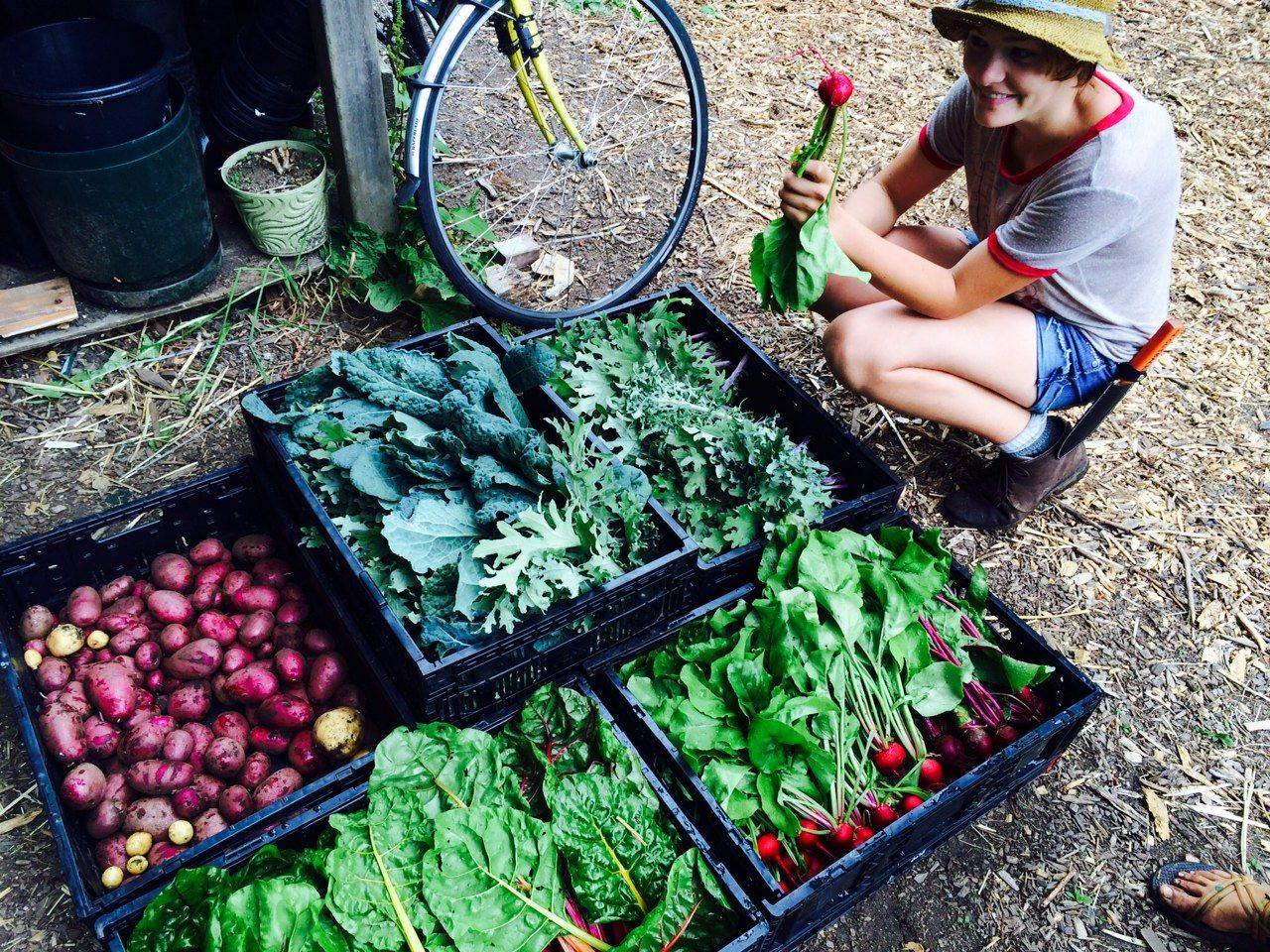 A student posing with their harvest of veggies and greens