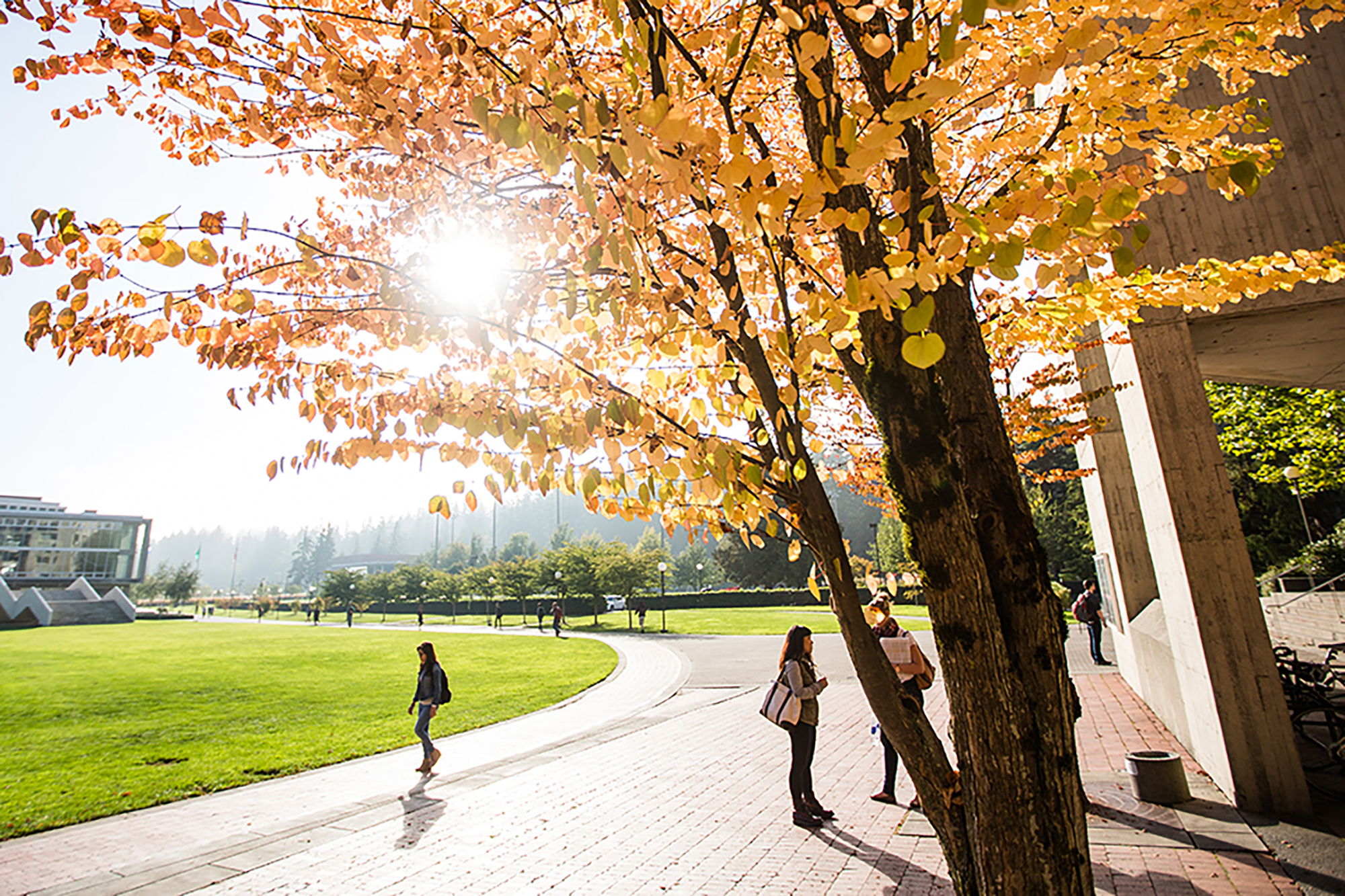 A student walks along a brick path on campus. Above head, a tree with golden and red leaves stretches across the top of the frame, with late afternoon sun peaking through the branches.