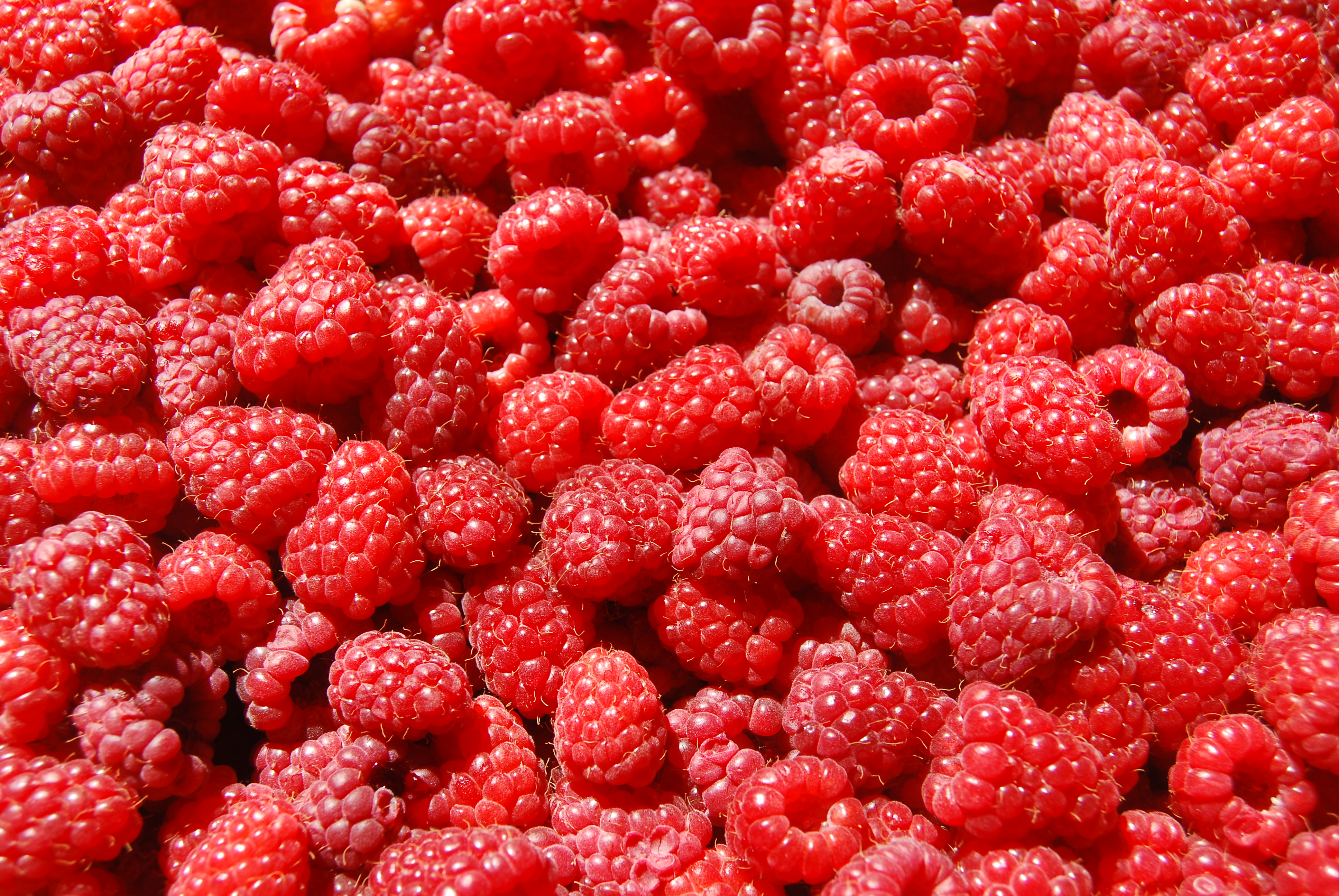 A close-up of red raspberries