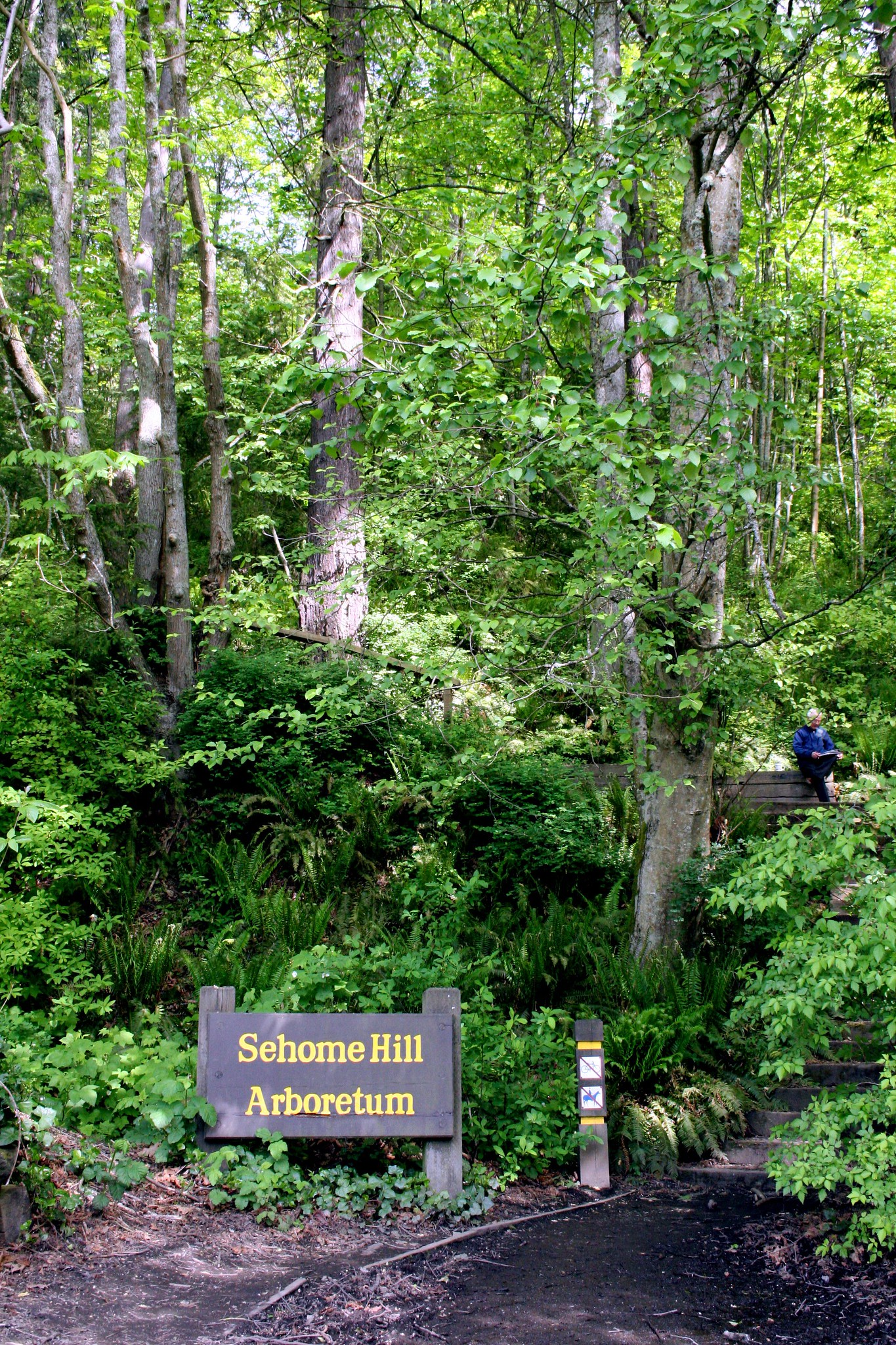 Wooden sign with yellow text that says Sehome Hill Arboretum next to stairs that lead into lush ferns and pine trees.