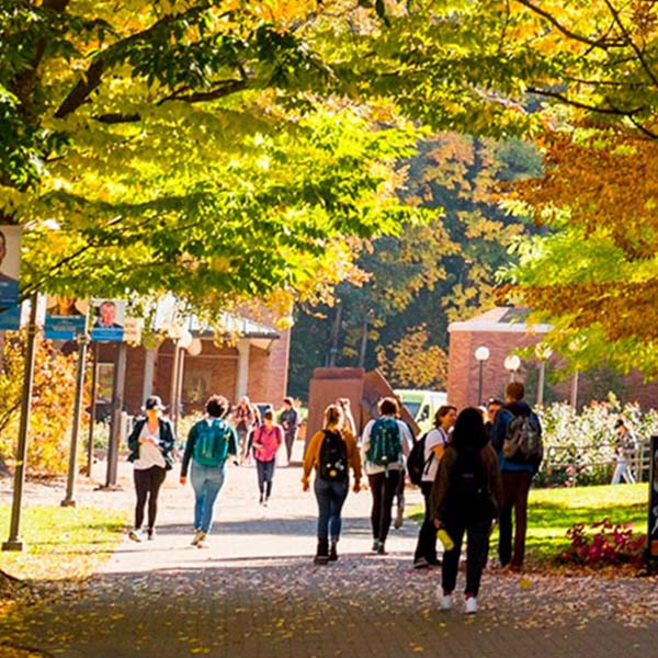 Students entering campus. The ground is laid bricks, there are many trees in various fall colors.
