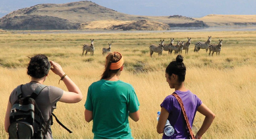 Student looking out across the savannah at a herd of zebras.